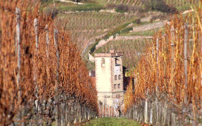 La tour des bouchers de Ribeauvillé depuis les vignes